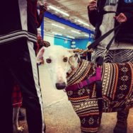 Dog-Fashion-Show-2-4-1-Bob Davis Podcast 906